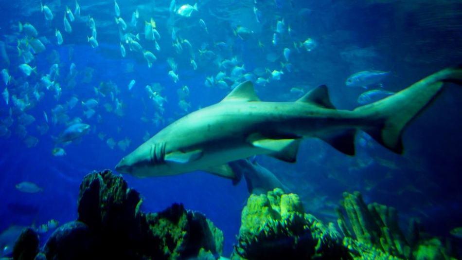 Listen listen listen! Even ikan jaws have problems!