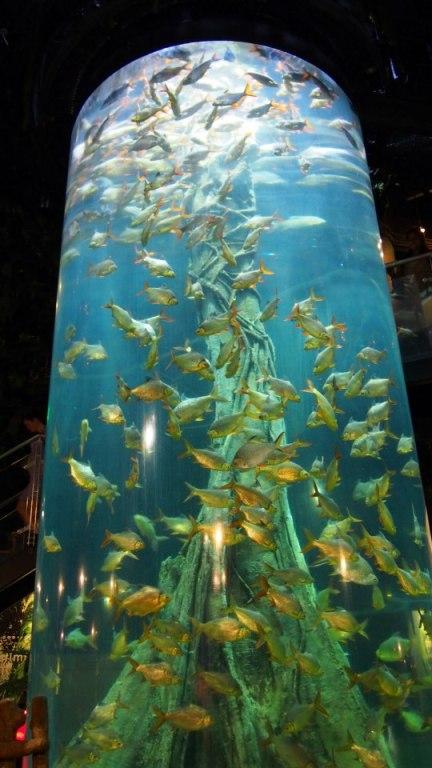 A pretty cool vertical aquarium