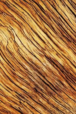 Cedar Wood