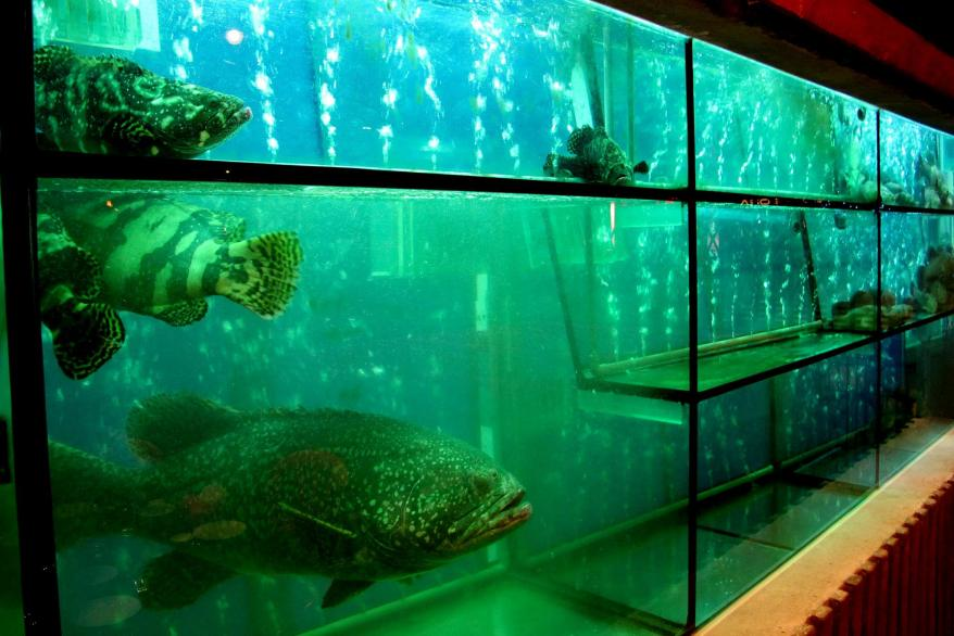The large aquarium which houses all the fish
