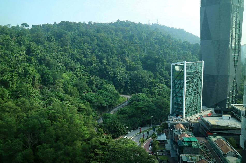 My room faced the lush greenery of the forest beside Damansara Perdana